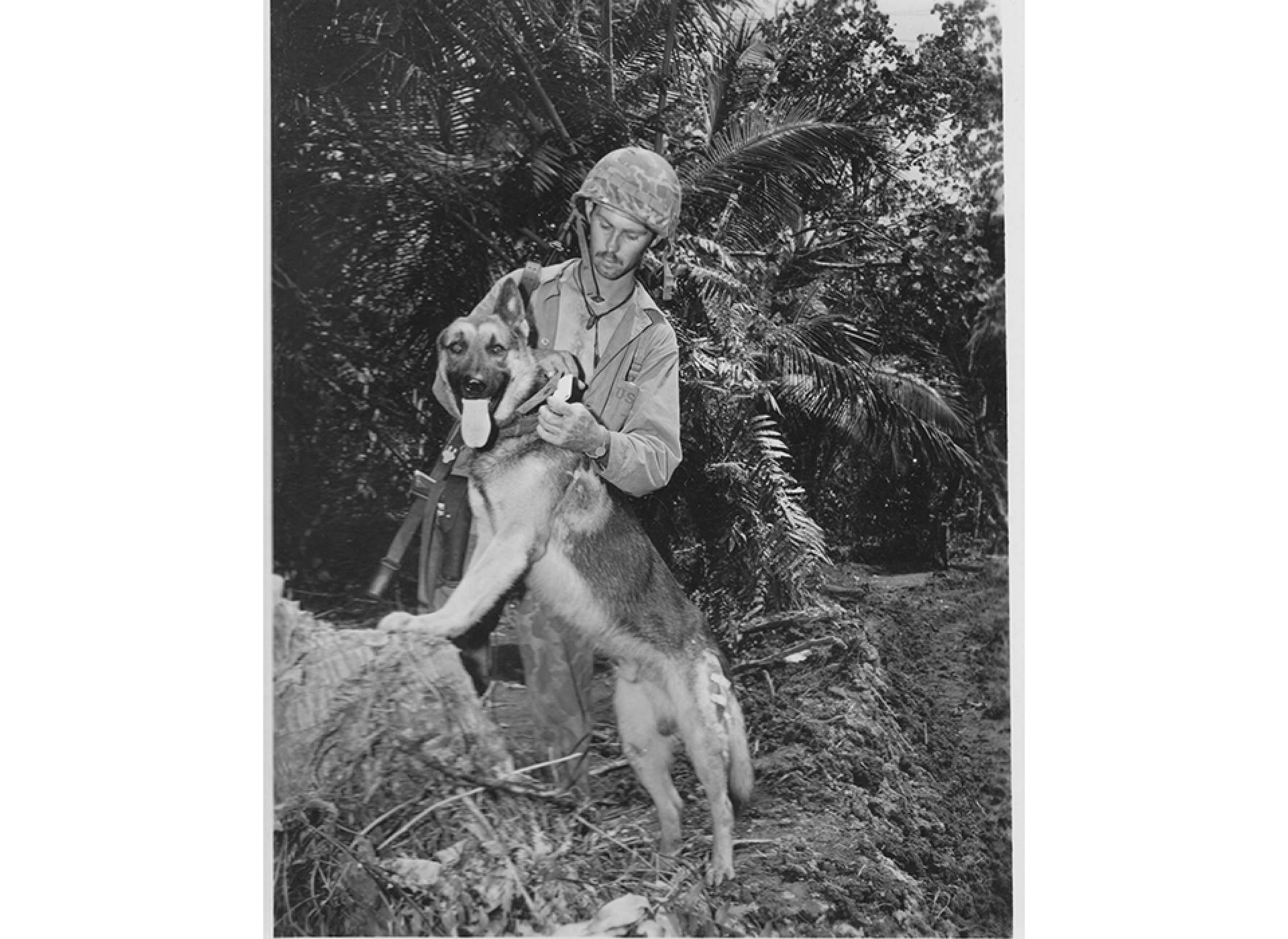 Pfc. John Kleeman and messenger dog Caesar on the west coast of Bougainville. Notice the bullet wound on Caesar's left shoulder, received during a Japanese attack. National Archives photo.